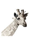 Giraffe Stampe di Philippe Debongnie