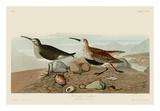 Red Backed Sandpiper Arte por John James Audubon