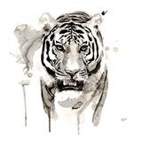 Tiger Poster di Philippe Debongnie