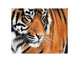 Tiger Crop Arte di Sarah Stribbling