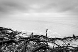 Broken Tree Branches on the Beach after Storm. Sea on a Cloudy Cold Day. Black and White, far Horiz Reproduction photographique par Michal Bednarek