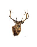 Stag White Background Poster di Sarah Stribbling