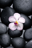 White Orchid with Therapy Stones Reproduction photographique par  crystalfoto