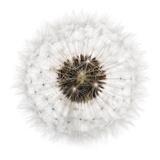 Seed Journey II Giclée-tryk af James Guilliam