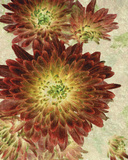 Champagne Floral III Giclee Print by  Collezione Botanica