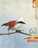 Bird III Giclee Print by Kareem Rizk