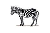 Zebra - Icon Posters by  Lantern Press