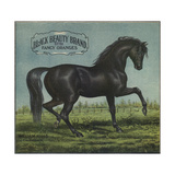 Black Beauty Brand - William Hills, California - Citrus Crate Label Poster von  Lantern Press