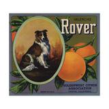 Rover Brand - Tustin, California - Citrus Crate Label Poster tekijänä  Lantern Press