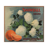 Snowball Brand - Ruddock, California - Citrus Crate Label Prints by  Lantern Press