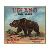 Upland Bear Brand - North Ontario, California - Citrus Crate Label Juliste tekijänä  Lantern Press