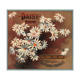 Daisy Brand - California - Citrus Crate Label Taide tekijänä  Lantern Press