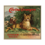Cougar Brand - Covina, California - Citrus Crate Label Julisteet tekijänä  Lantern Press