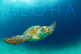 Sea Turtle Swimming - Aloha Láminas por  Lantern Press