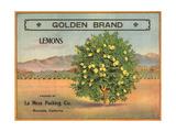 Golden Brand - Riverside, California - Citrus Crate Label Posters tekijänä  Lantern Press