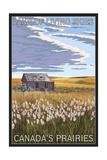 Canadas Praires - Land of Living Skies - Wheat Field and Shack Posters av  Lantern Press