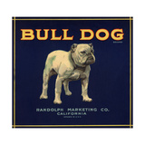 Bull Dog Head - California - Citrus Crate Label Taide tekijänä  Lantern Press