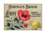 Hibiscus Brand - San Diego, California - Citrus Crate Label Posters tekijänä  Lantern Press