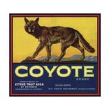 Coyote Brand - Upland, California - Citrus Crate Label Giclée-Premiumdruck von  Lantern Press