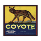 Coyote Brand - Upland, California - Citrus Crate Label Posters tekijänä  Lantern Press