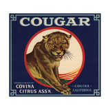 Cougar Brand - Covina, California - Citrus Crate Label Posters tekijänä  Lantern Press
