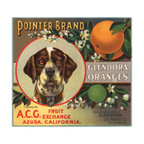 Pointer Brand - Glendora, California - Citrus Crate Label Posters tekijänä  Lantern Press