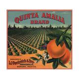 Quinta Amalia Brand - Sonora, Mexico - Citrus Crate Label Posters tekijänä  Lantern Press