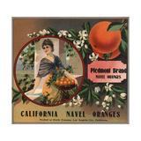 Piedmont Brand - Pomona, California - Citrus Crate Label Posters tekijänä  Lantern Press