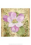 Vintage Apple Blossom II Affiches par Leslie Mark