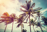 Coconut Palm Tree and Sky on Beach with Vintage Toned. Fotoprint van  tortoon