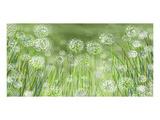 Dandelion party Affiches par Claire Westwood