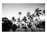 Black Palms on Samui island Posters