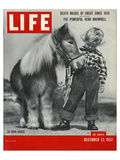 LIFE 30 inch Horse 1952 Pósters