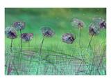Watery Flower show Art par Claire Westwood