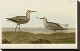 Long-Legged Sandpiper Toile tendue sur châssis par John James Audubon