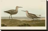 Long-Legged Sandpiper Opspændt lærredstryk af John James Audubon
