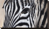 Zebra Eyes Stretched Canvas Print by Sarah Stribbling