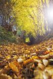 Sun Leaves Stampa fotografica di Viviane Fedieu Daniel