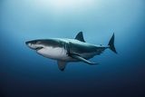 Great White Shark In The Depths Poster