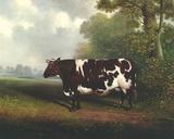Prize Heifer Giclée-tryk af C.D. Lange