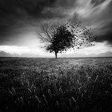 Illusion D'Un Printemps Perdu Fotografie-Druck von Sebastien Del Grosso
