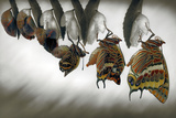 Emergence Photographic Print by Jimmy Hoffman