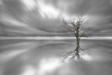 Ghost Tree Fotografie-Druck von Leif Løndal
