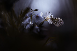 In Your Dreams, Everything Is Alright Photographic Print by Fabien Bravin