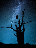 Alone in the Dark Photographic Print by Manu Allicot