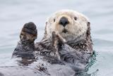 Yesterday I Caught a Fish Thiiis Big! - Otter. Alaska Fotografisk tryk af Roman Golubenko