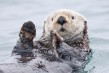 Yesterday I Caught a Fish Thiiis Big! - Otter. Alaska Premium-Fotodruck von Roman Golubenko