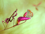 Patience Photographic Print by Jimmy Hoffman