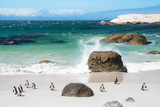 Awesome South Africa Collection - African Penguins at Boulders Beach VI Fotografie-Druck von Philippe Hugonnard