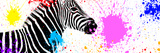 Safari Colors Pop Collection - Zebra VII Lámina giclée por Philippe Hugonnard